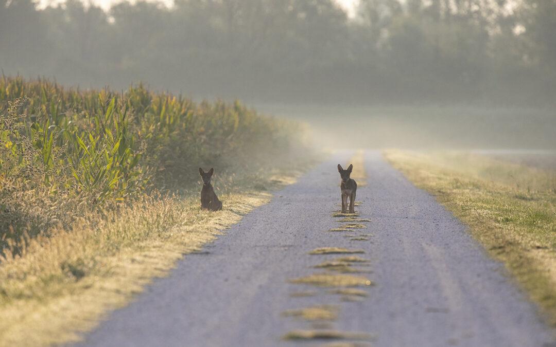 I martedì del lupo