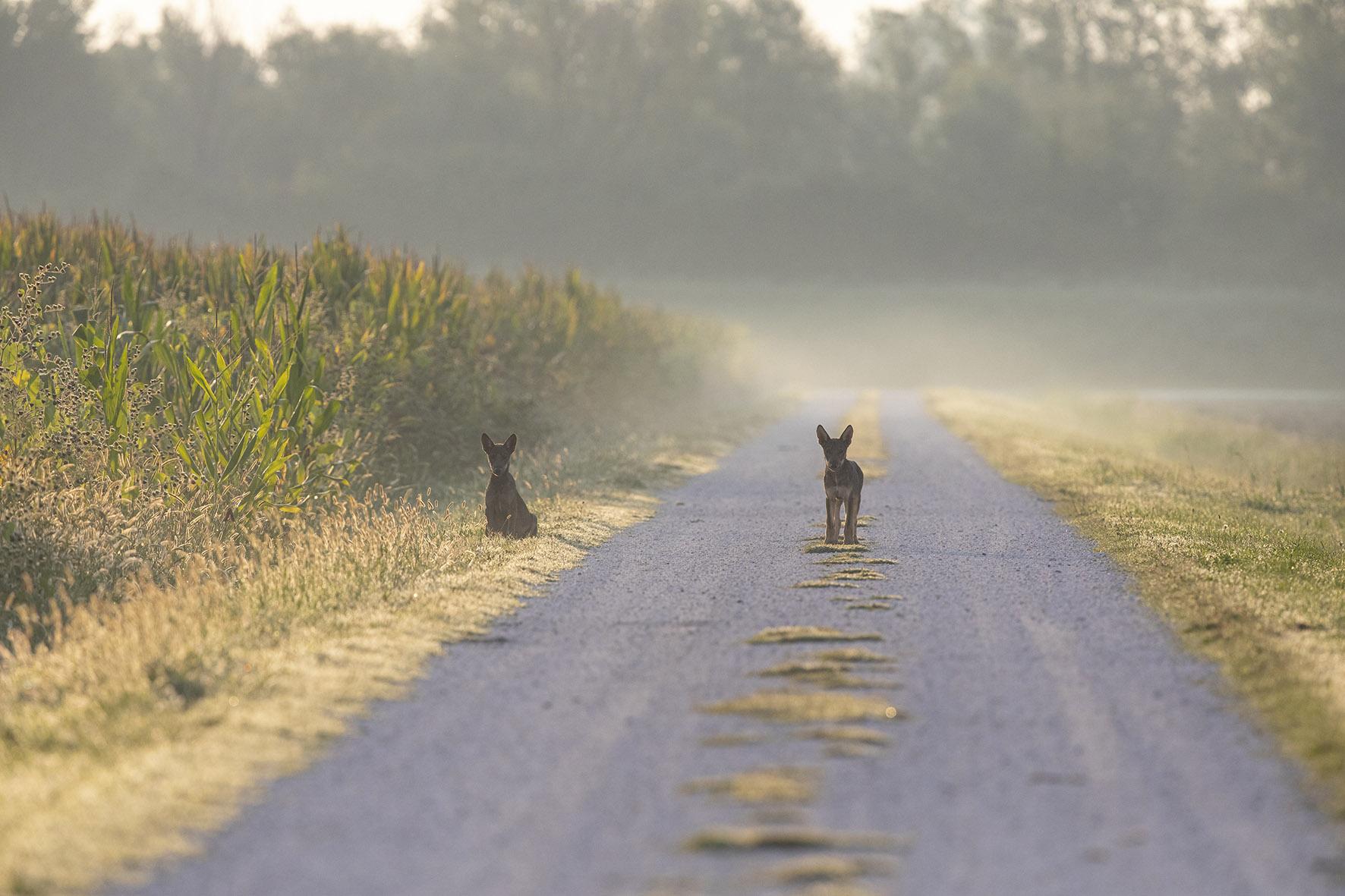 Il ritorno della fauna selvatica